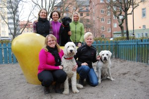 assistanshundskolan i Sveriges medlemmar