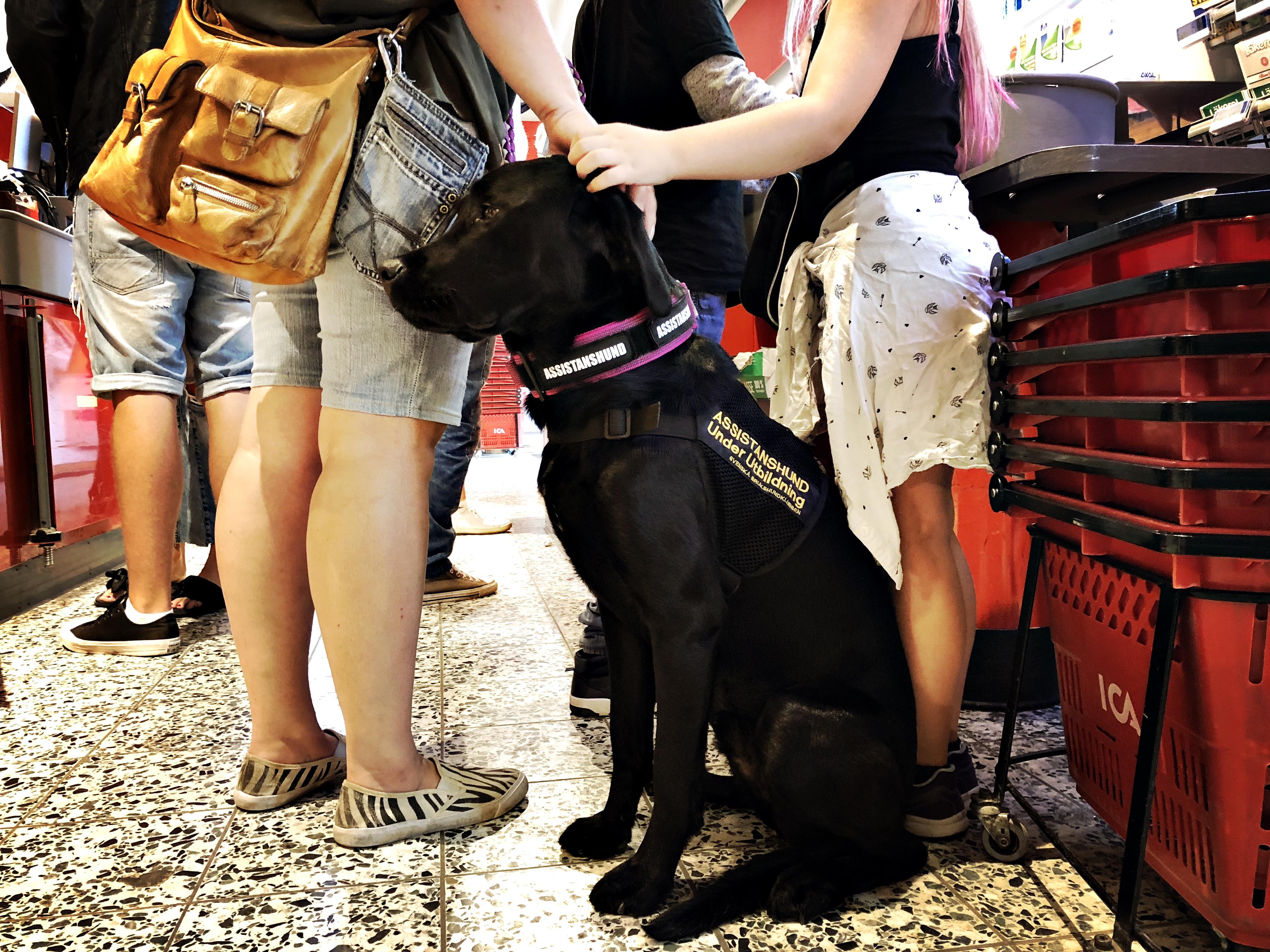 Hund för psykisk hälsa
