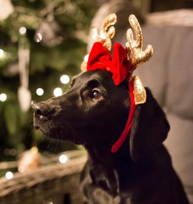 God jul & gott nytt år önskar Göta Hund